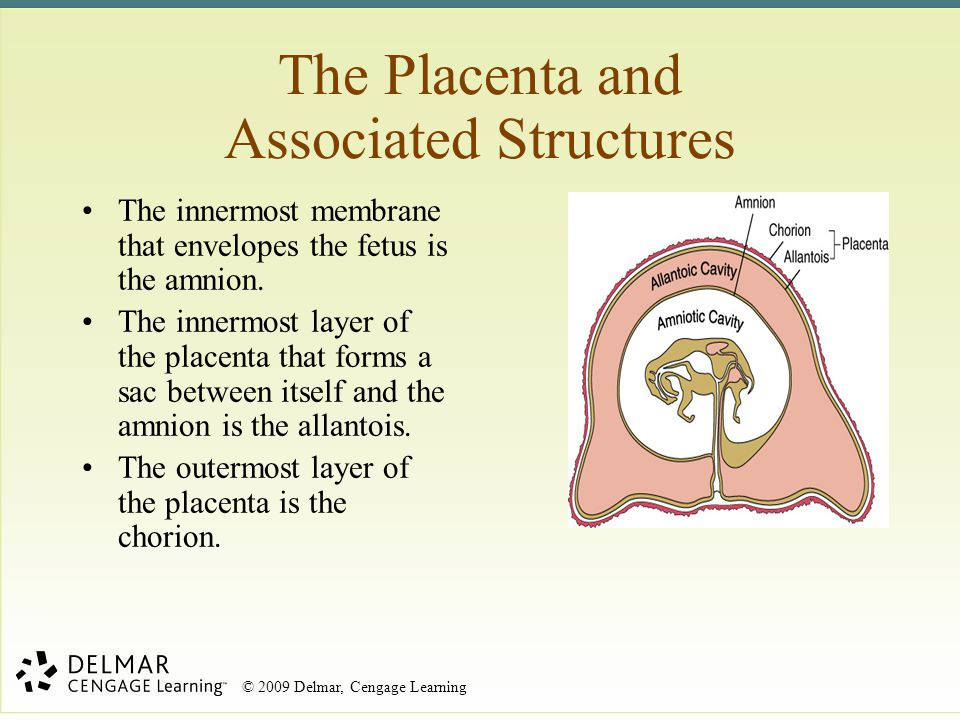 The Placenta and Associated Structures
