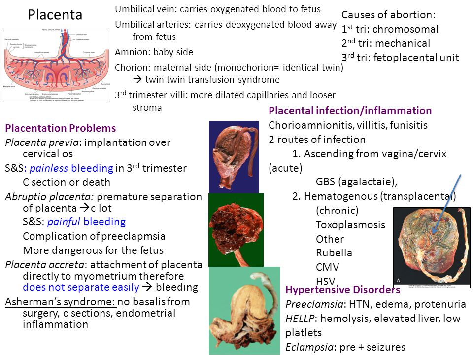 Placenta Causes of abortion: 1st tri: chromosomal 2nd tri: mechanical