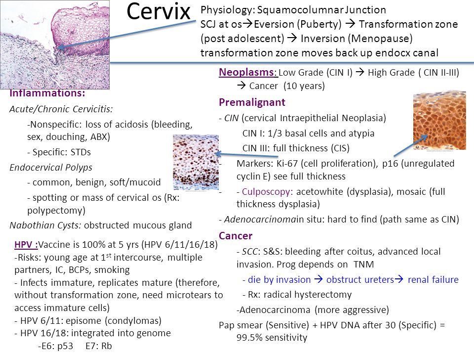 Cervix Physiology: Squamocolumnar Junction