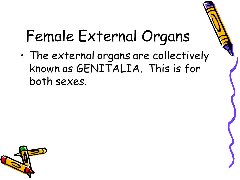 Female External Organs