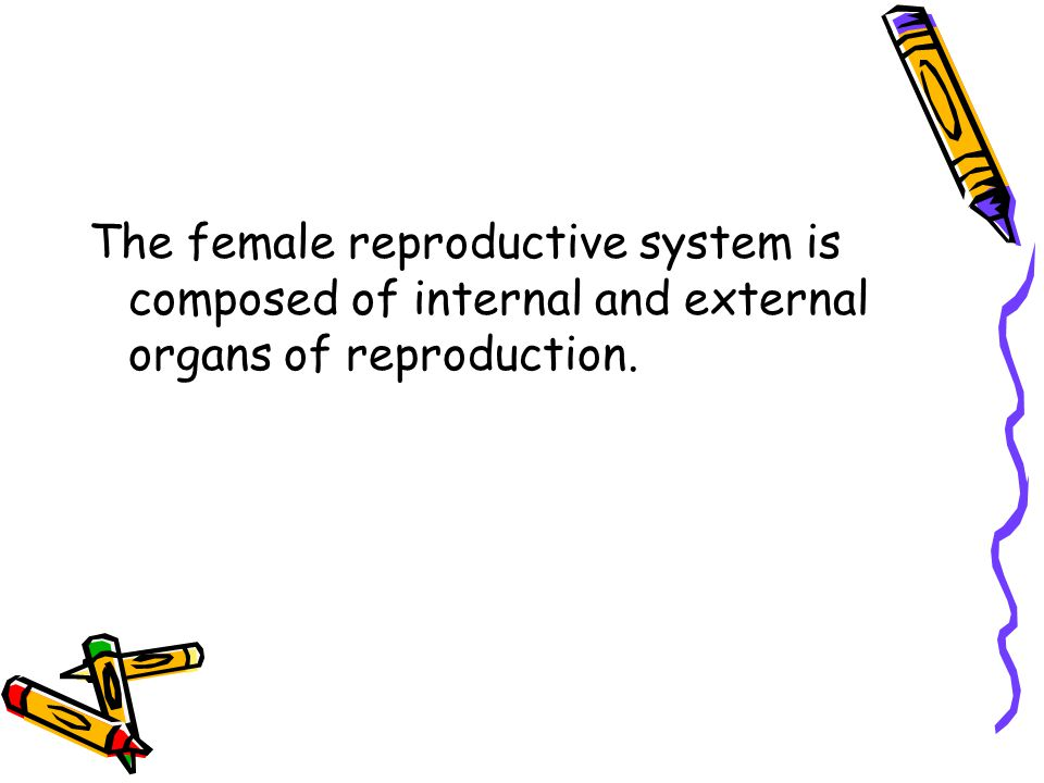 The female reproductive system is composed of internal and external organs of reproduction.
