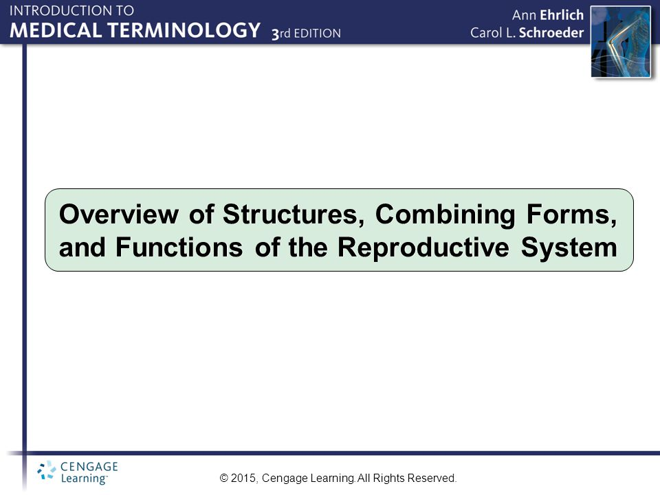 Overview of Structures, Combining Forms, and Functions of the Reproductive System