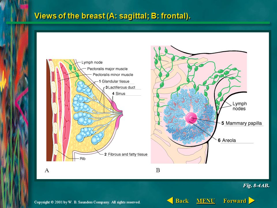 Views of the breast (A: sagittal; B: frontal).