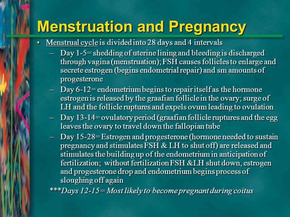 Menstruation and Pregnancy