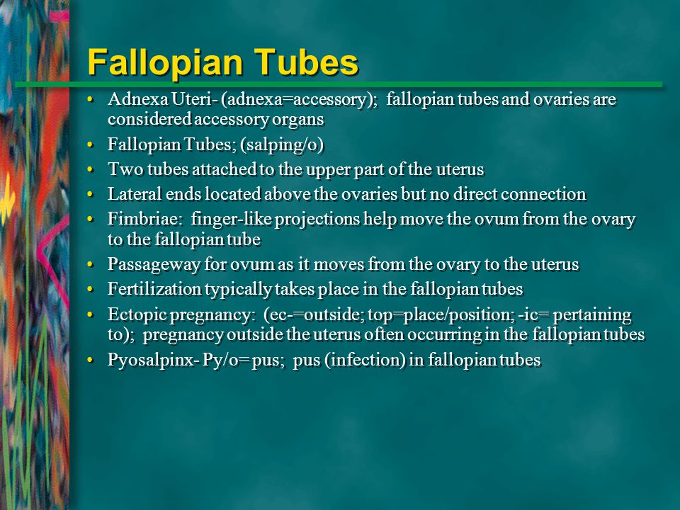 Fallopian Tubes Adnexa Uteri- (adnexa=accessory); fallopian tubes and ovaries are considered accessory organs.