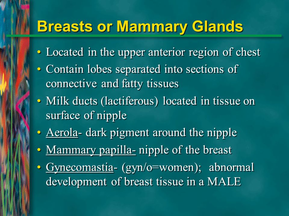 Breasts or Mammary Glands