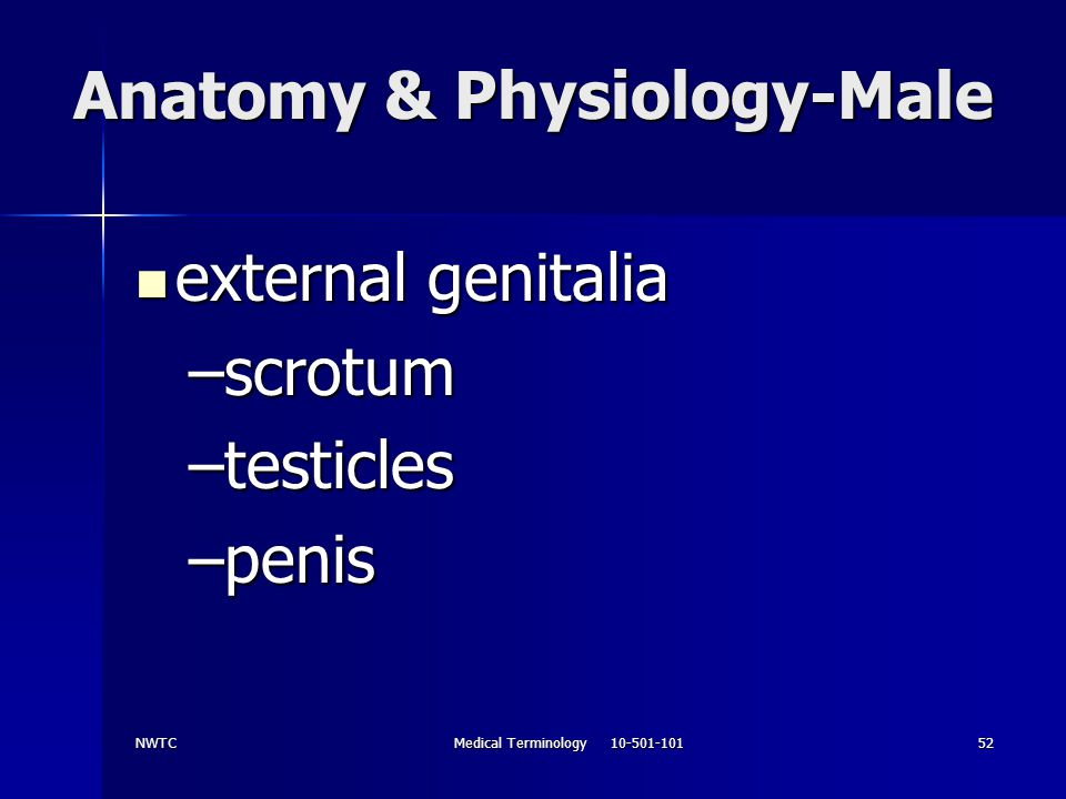 Anatomy & Physiology-Male