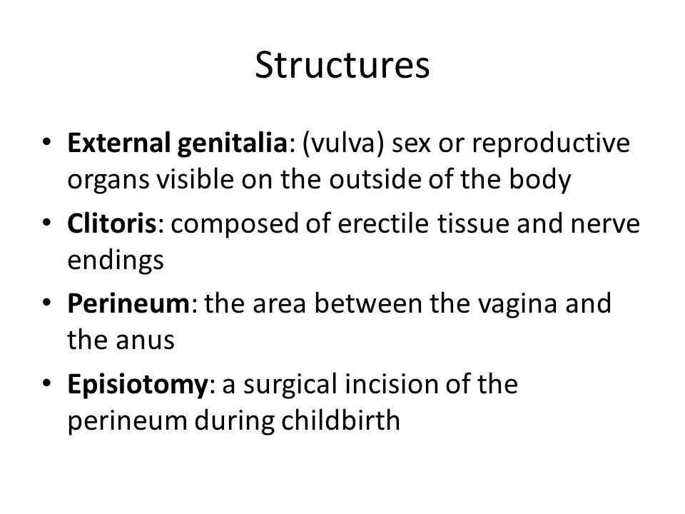 Structures External genitalia: (vulva) sex or reproductive organs visible on the outside of the body.