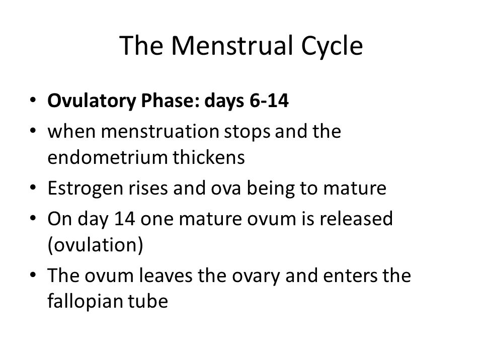 The Menstrual Cycle Ovulatory Phase: days 6-14