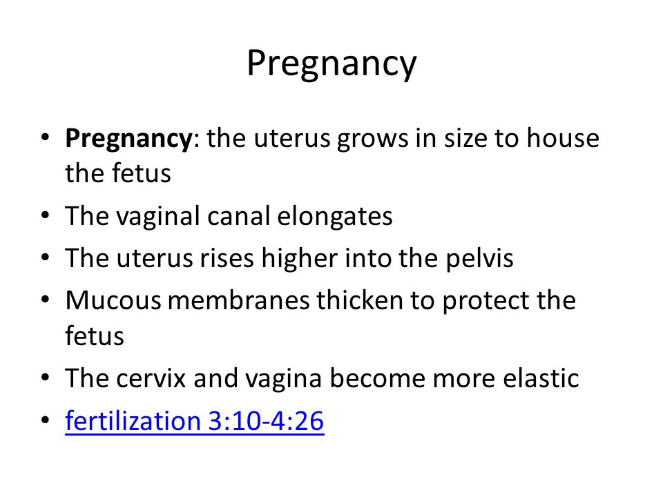 Pregnancy Pregnancy: the uterus grows in size to house the fetus