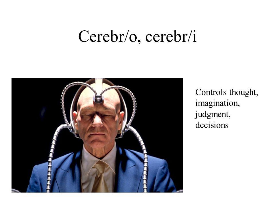 Cerebr/o, cerebr/i Controls thought, imagination, judgment, decisions