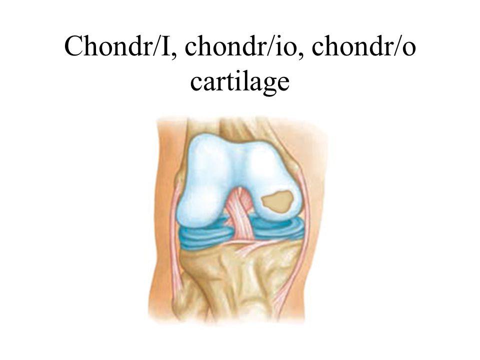 Chondr/I, chondr/io, chondr/o cartilage
