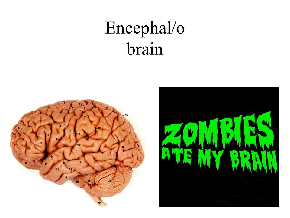 Encephal/o brain
