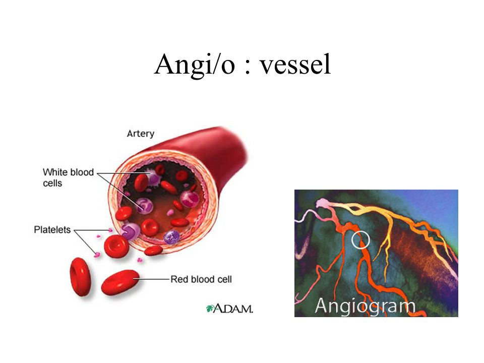 Angi/o : vessel
