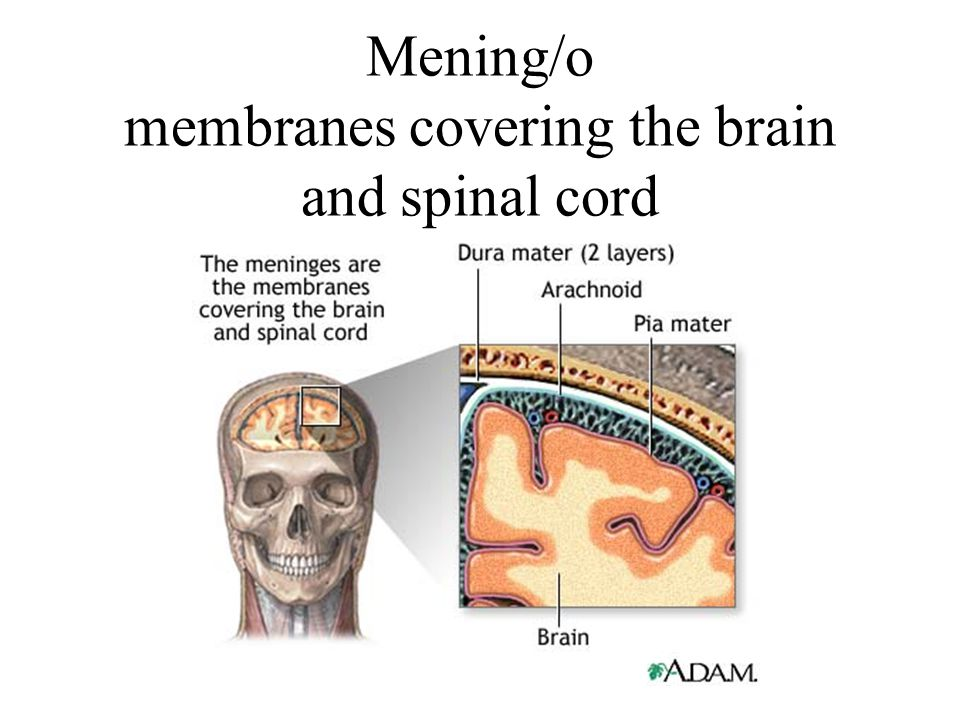 Mening/o membranes covering the brain and spinal cord