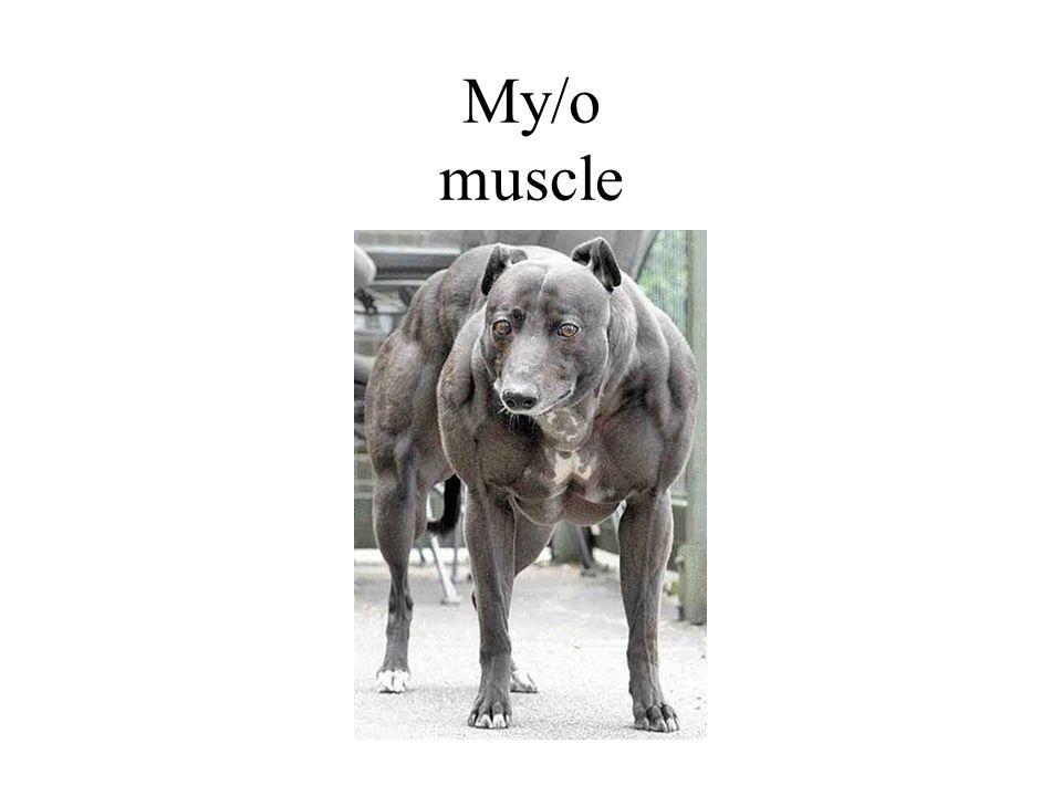 My/o muscle