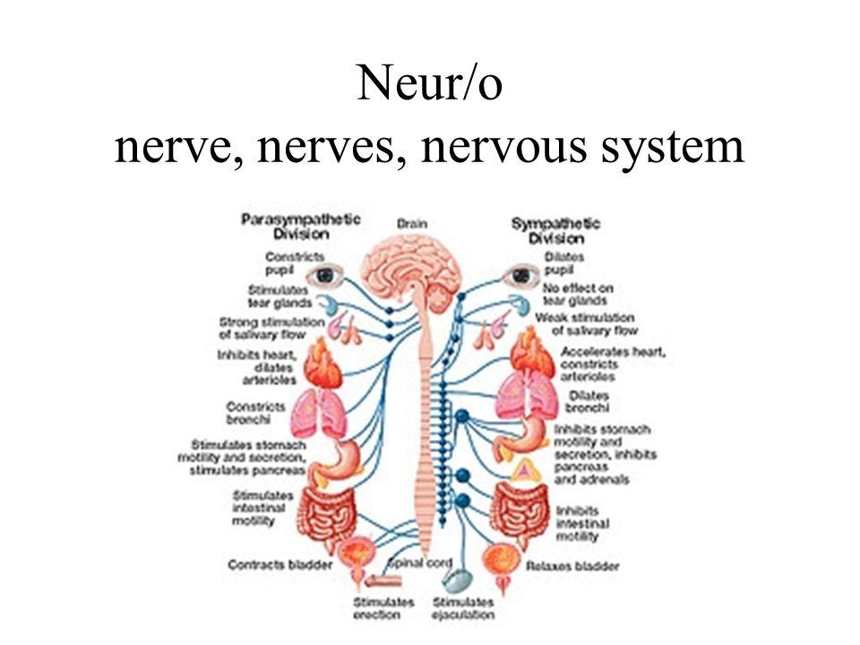 Neur/o nerve, nerves, nervous system