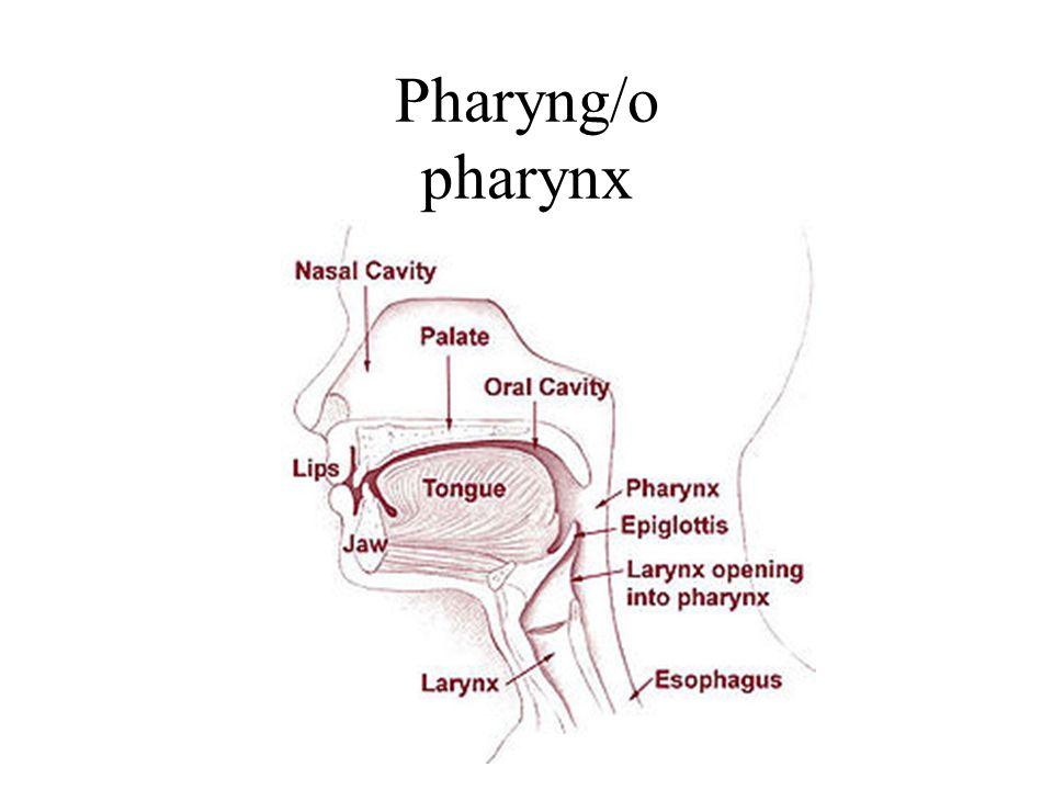 Pharyng/o pharynx