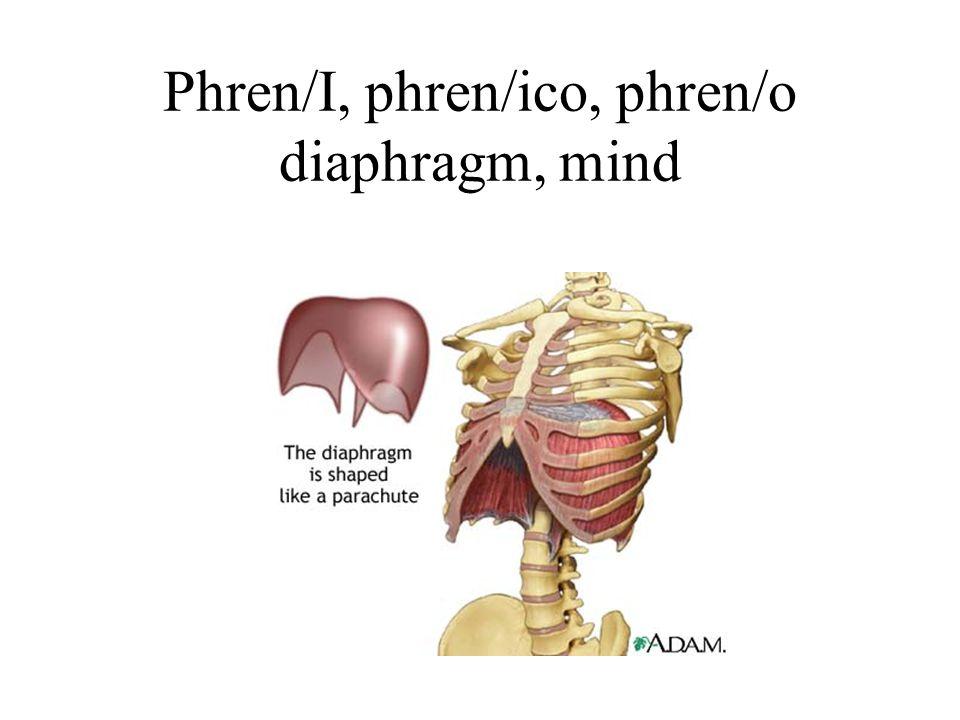Phren/I, phren/ico, phren/o diaphragm, mind