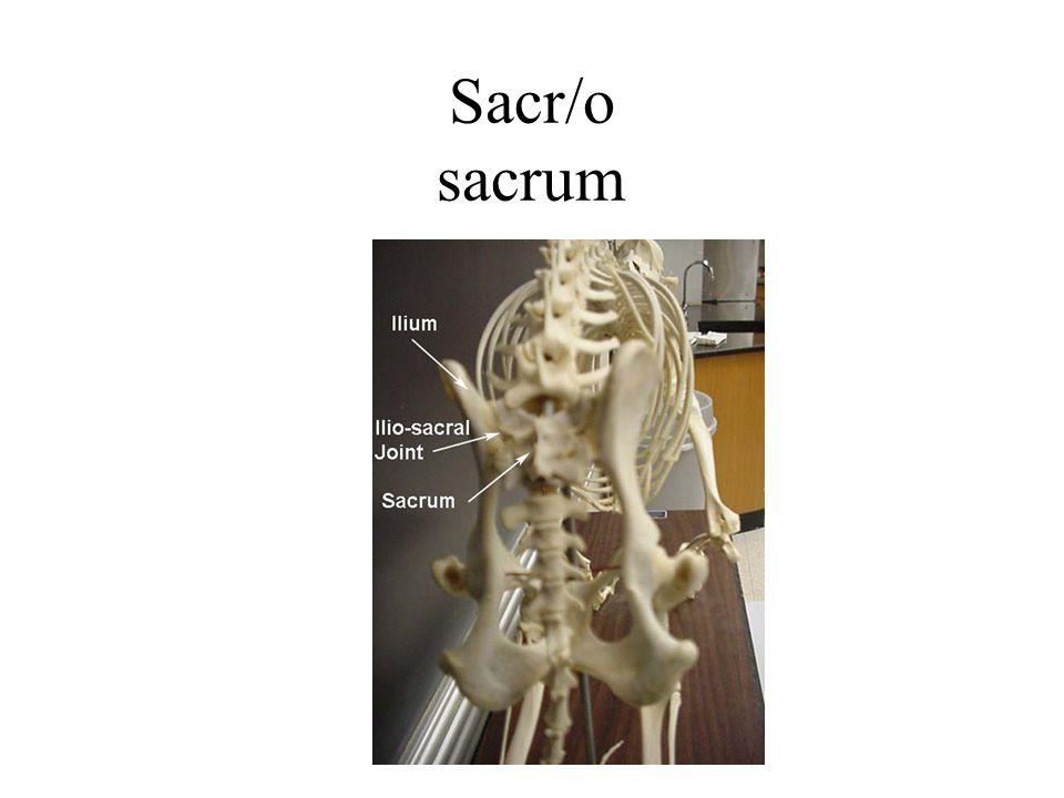 Sacr/o sacrum