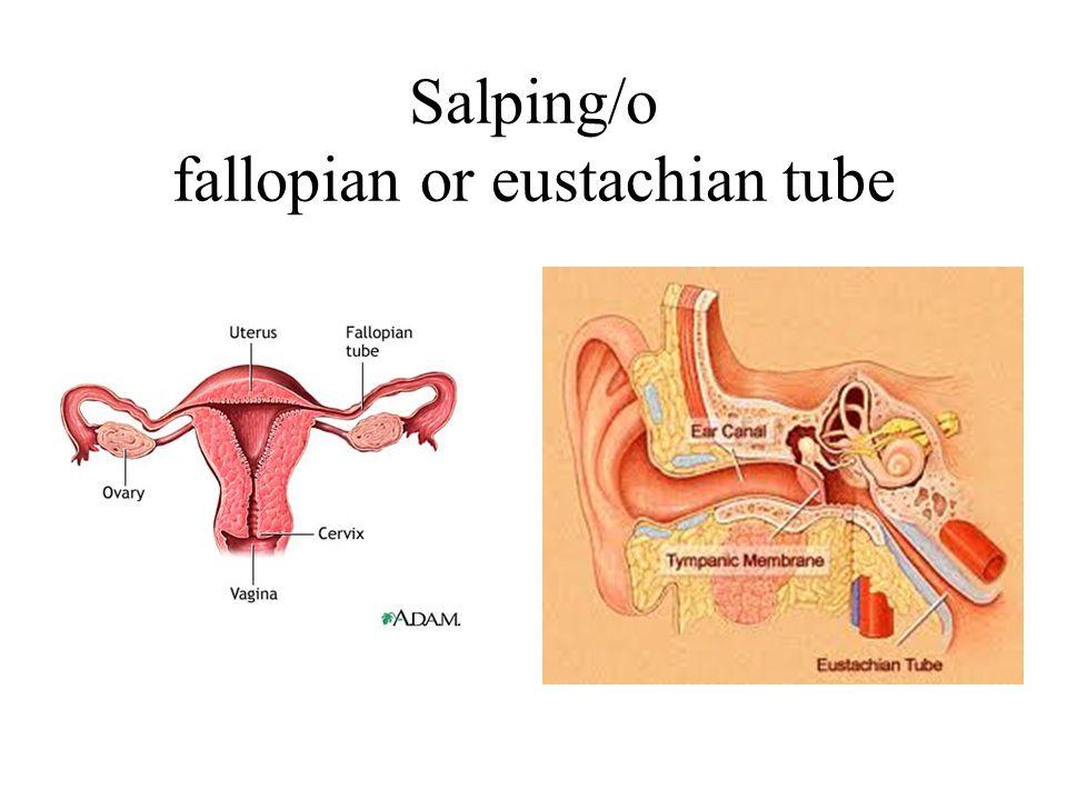 Salping/o fallopian or eustachian tube