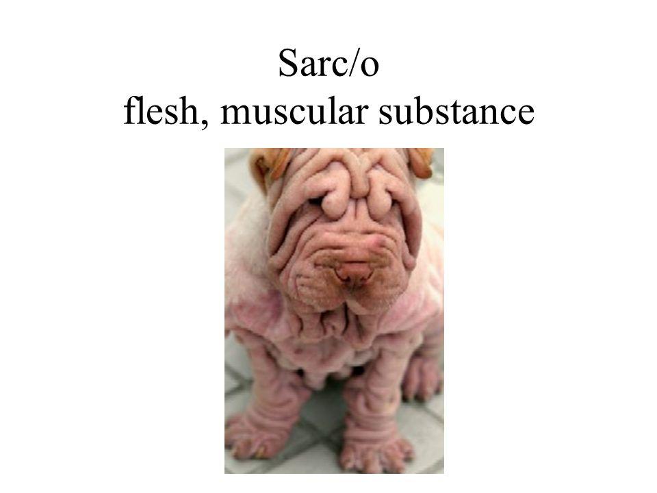 Sarc/o flesh, muscular substance