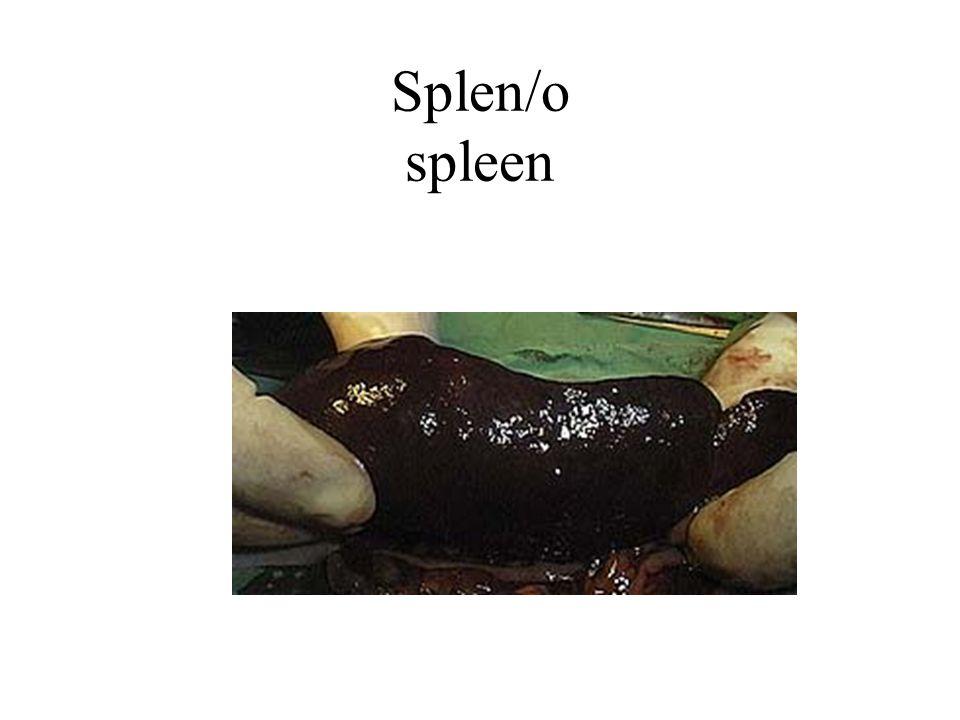 Splen/o spleen