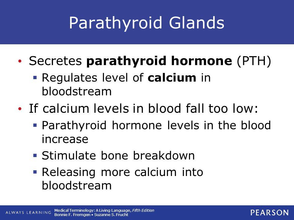 Parathyroid Glands Secretes parathyroid hormone (PTH)