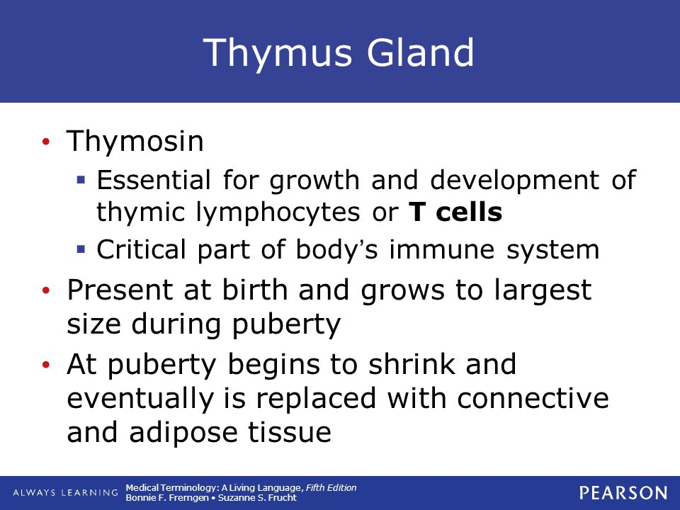 Thymus Gland Thymosin. Essential for growth and development of thymic lymphocytes or T cells. Critical part of body's immune system.