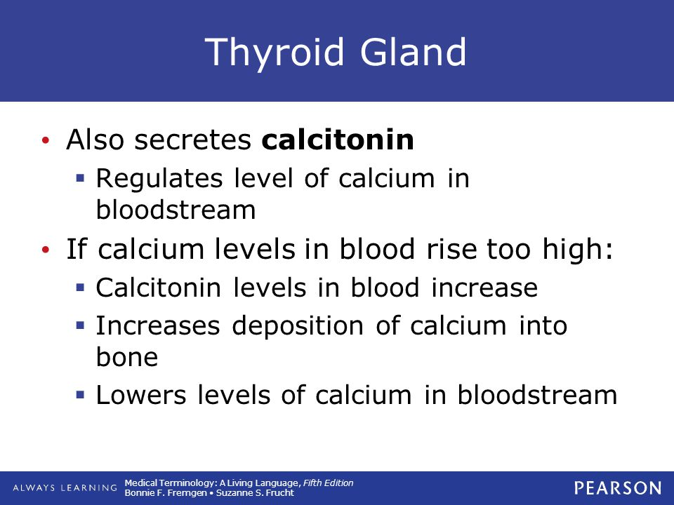 Thyroid Gland Also secretes calcitonin