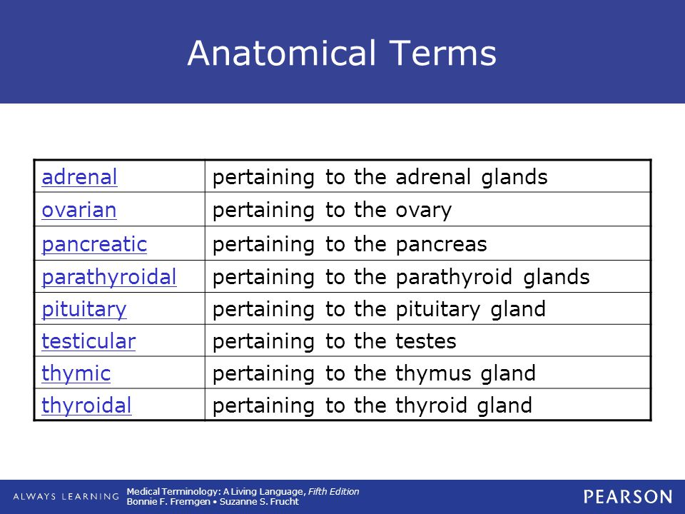 Anatomical Terms adrenal pertaining to the adrenal glands ovarian