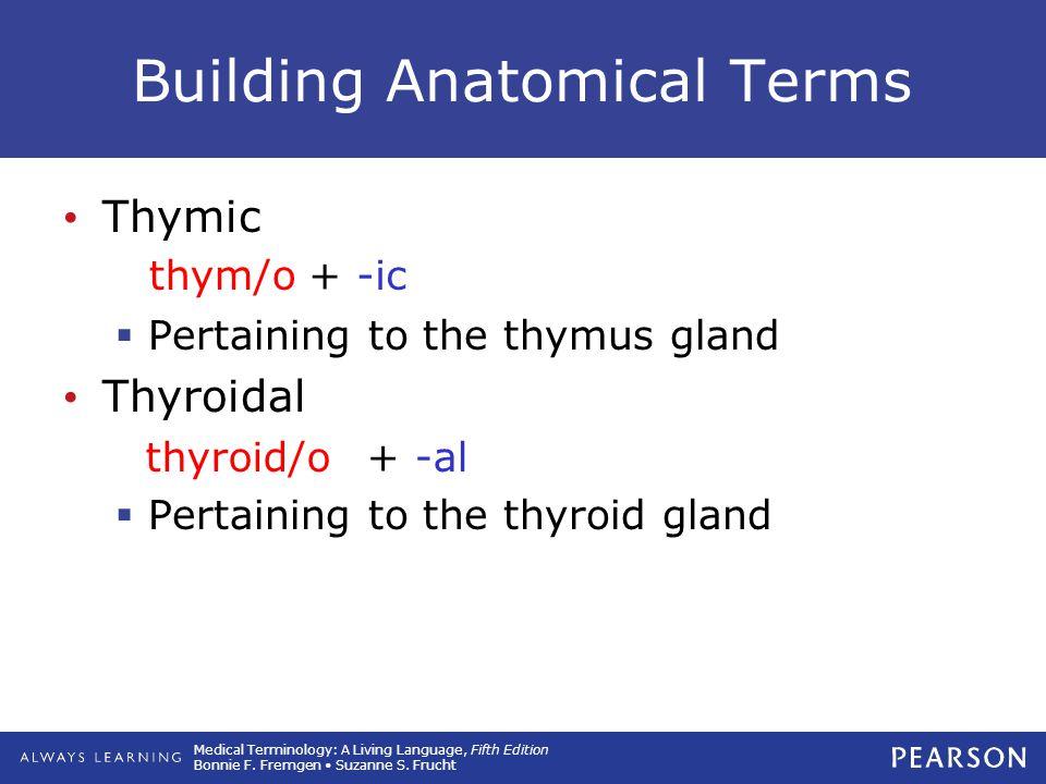 Building Anatomical Terms