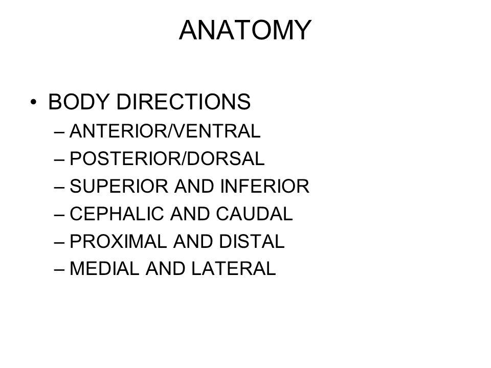 ANATOMY BODY DIRECTIONS ANTERIOR/VENTRAL POSTERIOR/DORSAL