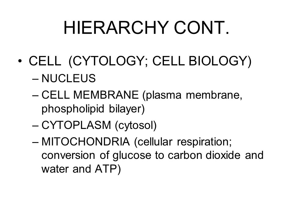 HIERARCHY CONT. CELL (CYTOLOGY; CELL BIOLOGY) NUCLEUS