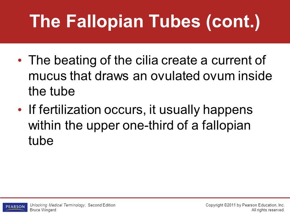 The Fallopian Tubes (cont.)