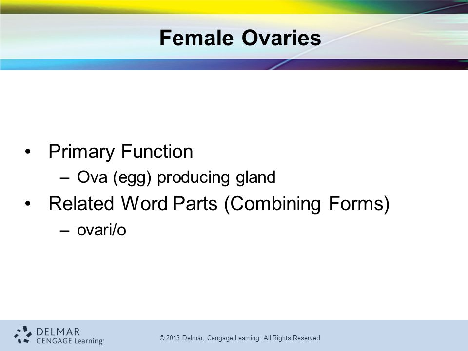 Female Ovaries Primary Function Related Word Parts (Combining Forms)