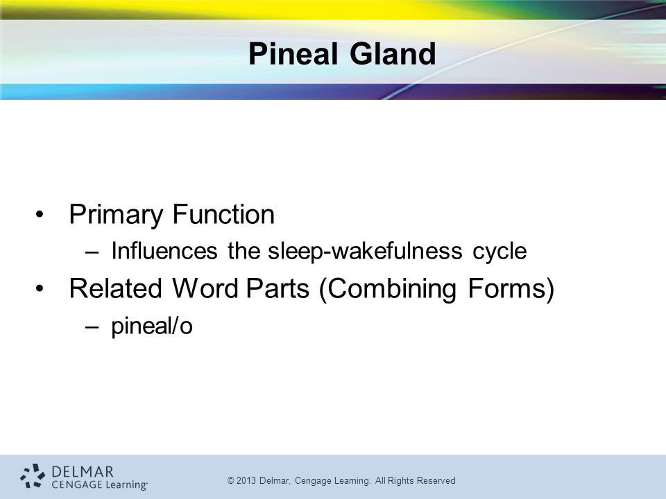 Pineal Gland Primary Function Related Word Parts (Combining Forms)