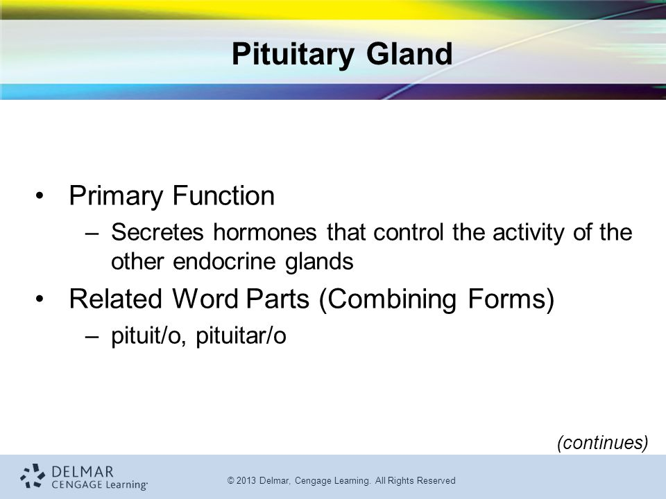 Pituitary Gland Primary Function Related Word Parts (Combining Forms)