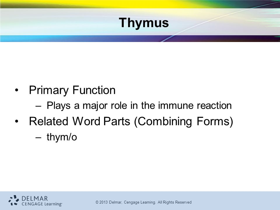 Thymus Primary Function Related Word Parts (Combining Forms)