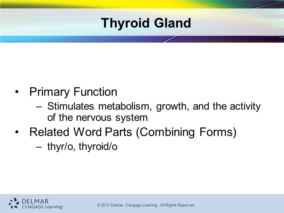 Thyroid Gland Primary Function Related Word Parts (Combining Forms)