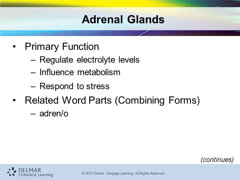 Adrenal Glands Primary Function Related Word Parts (Combining Forms)