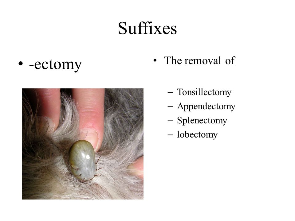 Suffixes -ectomy The removal of Tonsillectomy Appendectomy Splenectomy