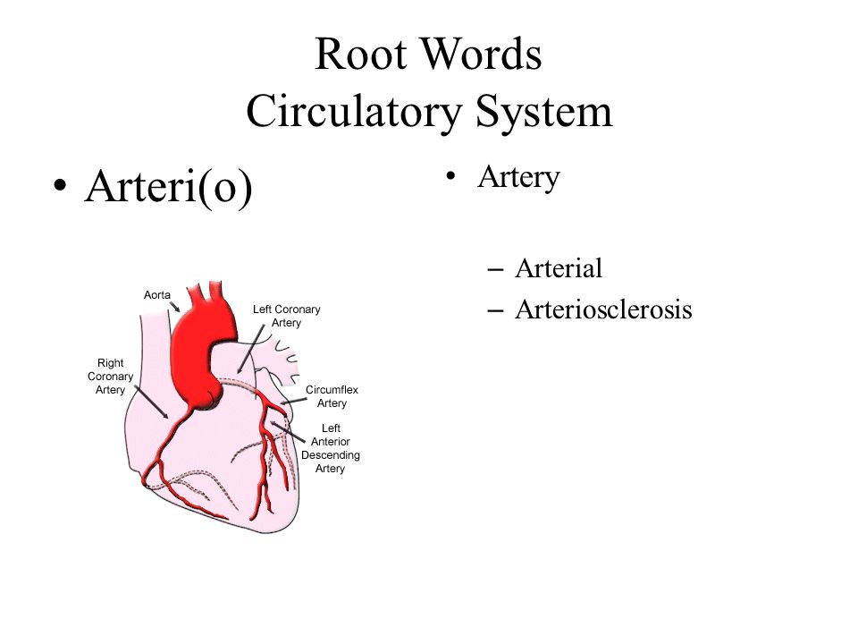 Root Words Circulatory System