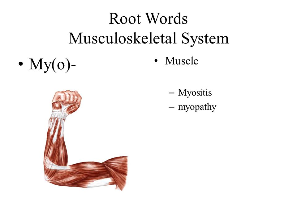 Root Words Musculoskeletal System