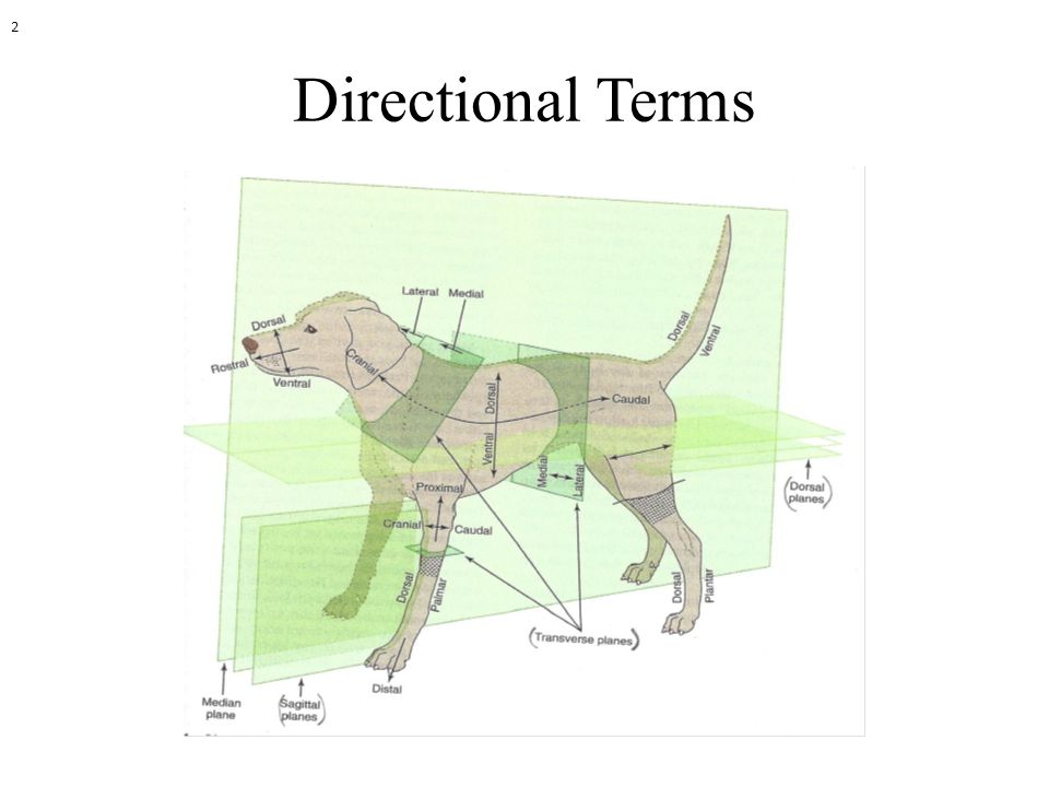 2 Directional Terms
