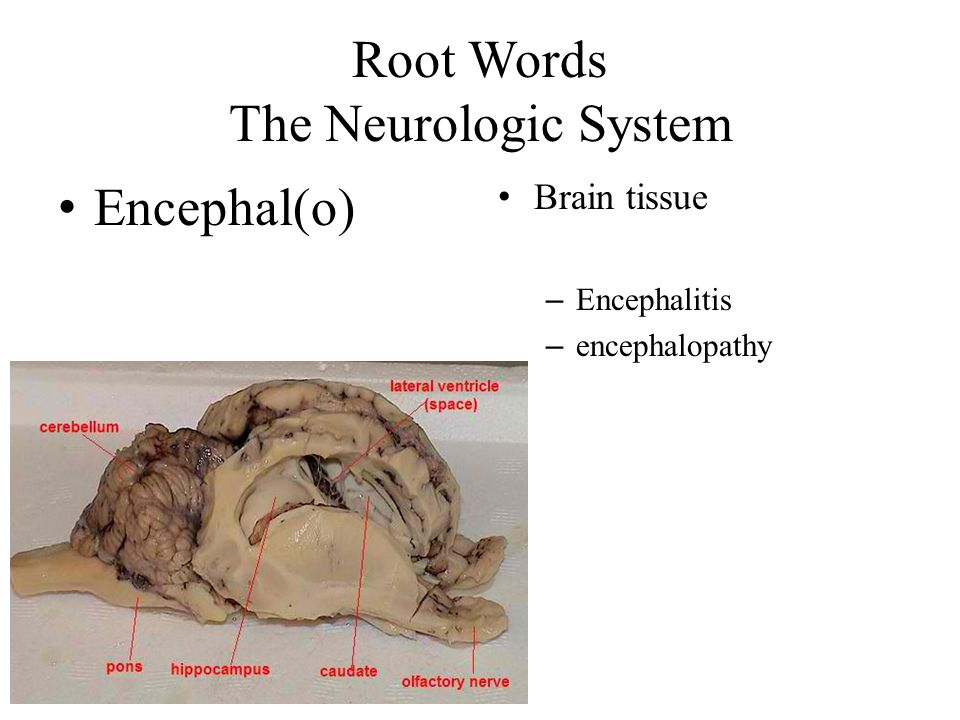 Root Words The Neurologic System