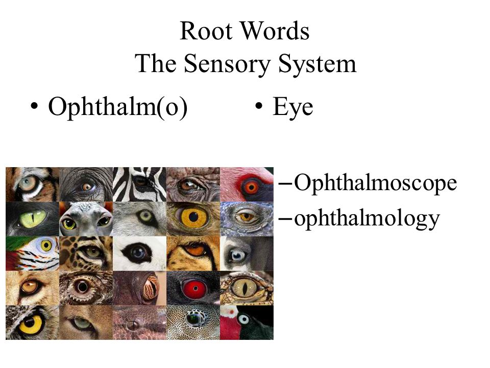 Root Words The Sensory System