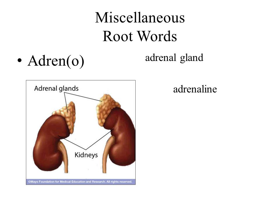 Miscellaneous Root Words