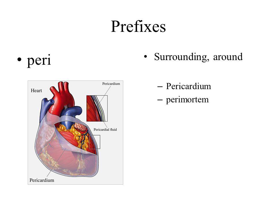 Prefixes peri Surrounding, around Pericardium perimortem
