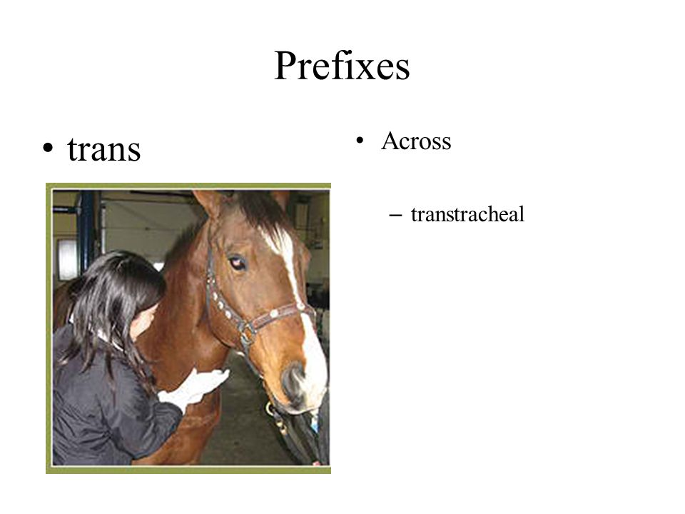 Prefixes trans Across transtracheal